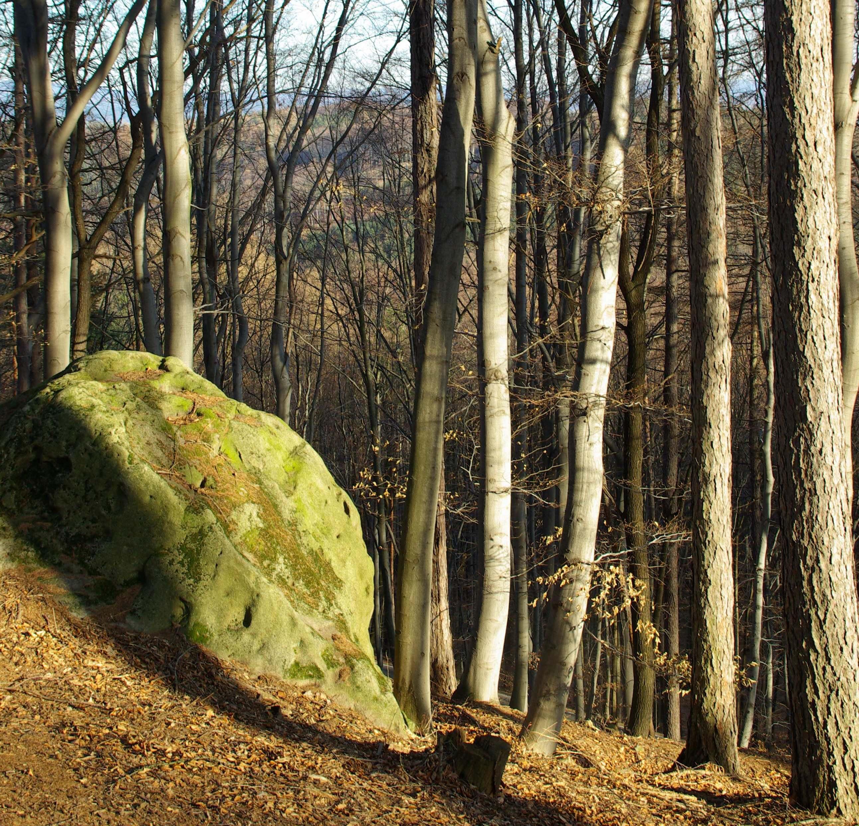 V karpatských pralesech převládají bučiny.
