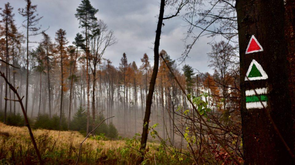 Lesní pěšina na Tlustou horu