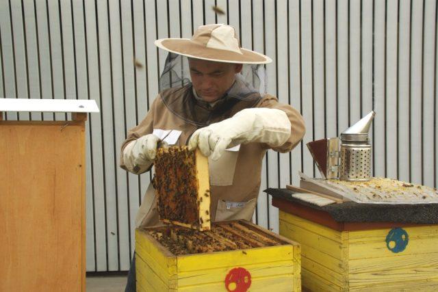 Univerzita Tomáše Bati ve Zlíně sklidila první med