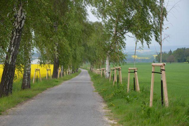 Alej podél silnice Újezdec – Růžový palouček | foto:  Správa a údržba silnic Pardubického kraje