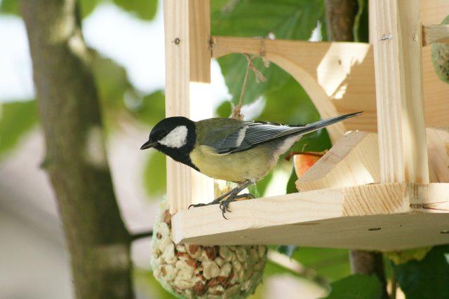 Sýkorka, krmítko, ptáci