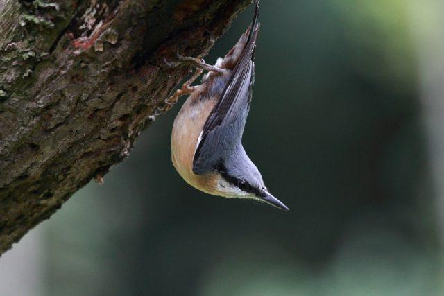 Poznáš, který pták je na obrázku?