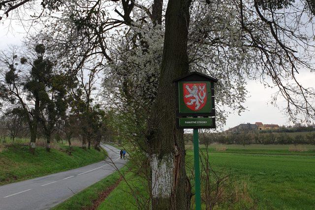Aleje v Kvasicích na Kroměřížsku - značka chráněné památkové stromy na začátku lipovojírovcové aleje