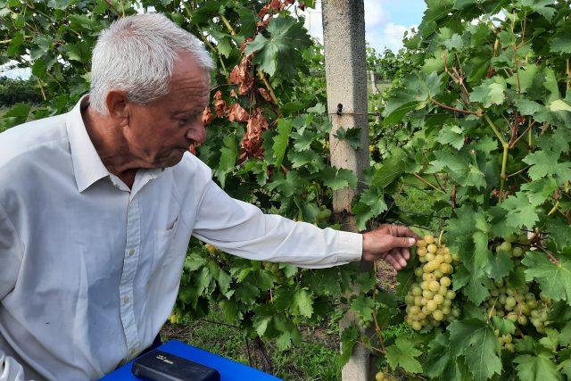 Vínař Zdeněk Habrovanský z Polešovic,  vinobraní 2021 | foto: Michal Sladký,  Český rozhlas