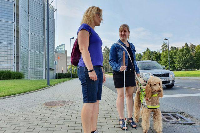 Vodící psi trénují ve Zlíně