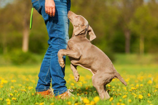 Skákající štěně (ilustrační foto)