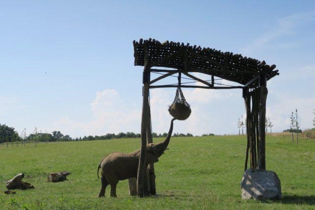 přístřešek pro slony v ZOO Lešná