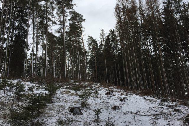 Les kolem přehrady Švihov