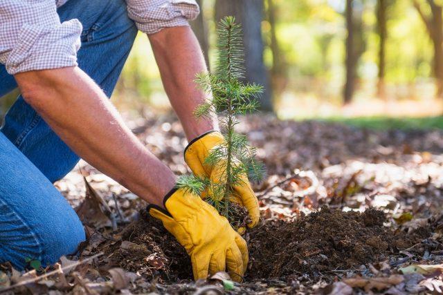 Sázení stromků (ilustrační foto)