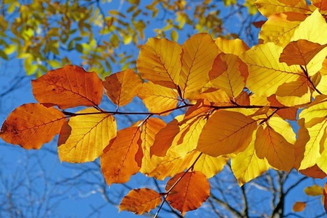 Podzim (ilustrační foto)