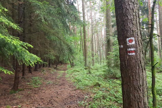 Turistická značka, naučná stezka, příroda, les, cesta, výlet, dovolená