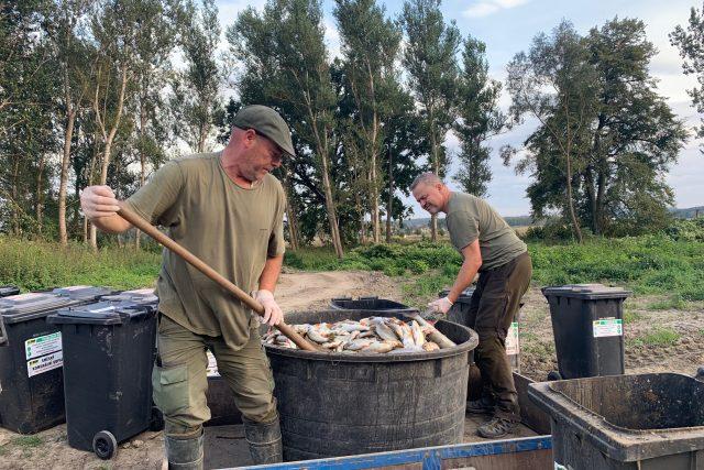 Odklízení uhynulých ryb z Bečvy | foto: Lenka Kratochvílová,  Český rozhlas