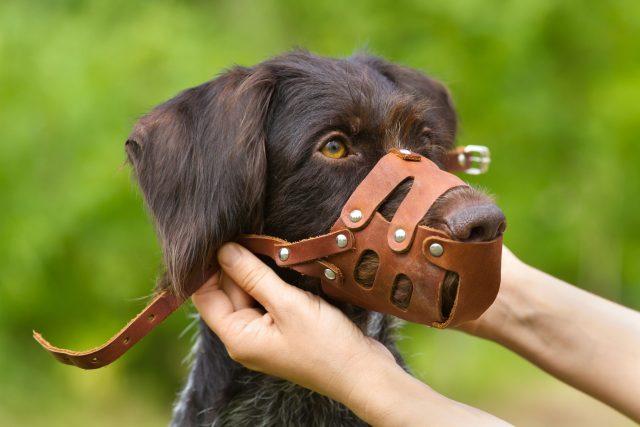 Pes, náhubek (ilustrační)