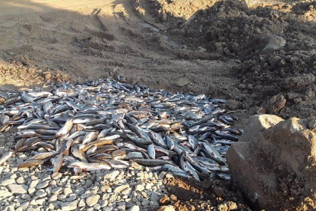 Uhynulé ryby po úniku chemikálie do řeky Bečvy